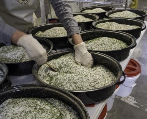 Cass mixing a batch of salt